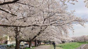 訪問福祉理美容 美々ネット埼玉 桜写真